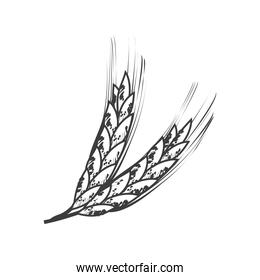 wheat branches food