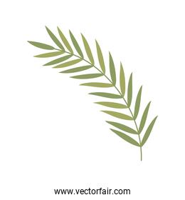 leaves nature frond