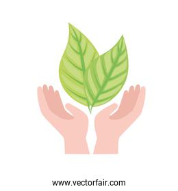 Plant leaves over hands