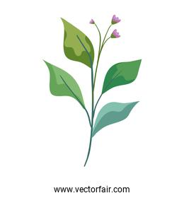 natural plant leaves