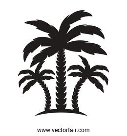 trees palms silhouettes