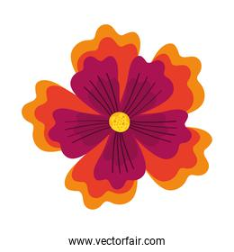 cute flower with petals