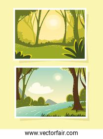 two scenes of forest