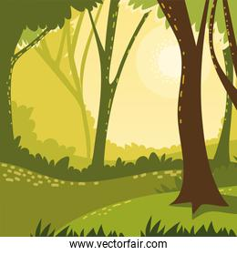 forest plants and trees