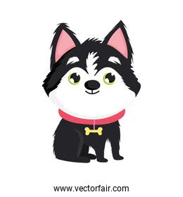 little dog with collar