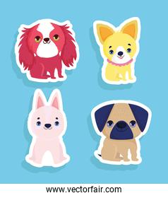 small dogs set
