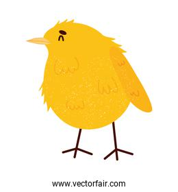 yellow chick icon