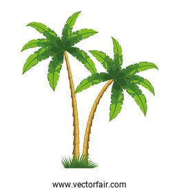 two tropical trees palms