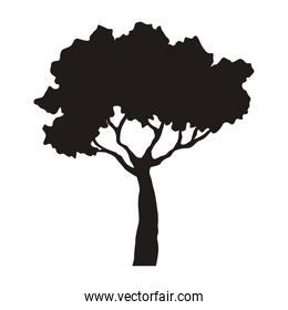 tree forest silhouette