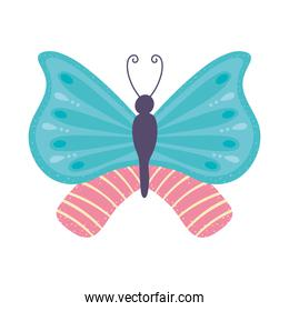butterfly insect cartoon