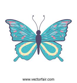 spotted butterfly cartoon