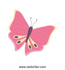 pink butterfly insect