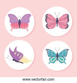 beautiful butterfly collection