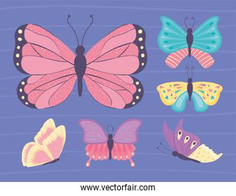 different butterfly set