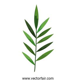 Isolated tropical leaf