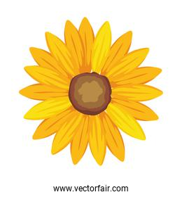 Isolated yellow flower