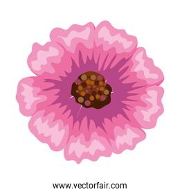 Isolated pink flower
