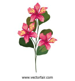 orchid flowers with leaves