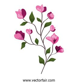pink flowers branch with leaves