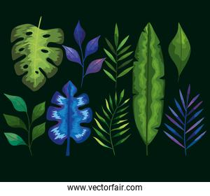 leaves icon collection