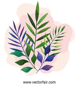 green and blue leaves