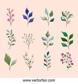 leaves and flowers icon collection
