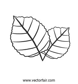 two leaves icon