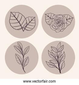 leaves and flowers symbol collection