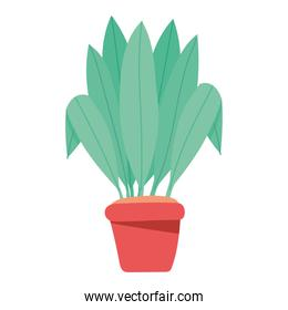 plant in red pot