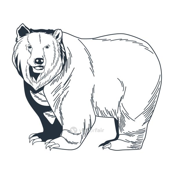 bear grizzly animal