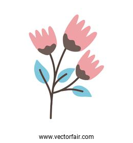 pink flowers with blue leaves