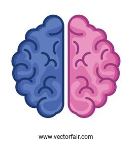 pink and blue brain
