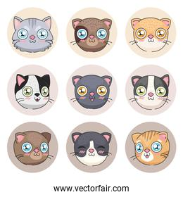 cats cartoons icon collection