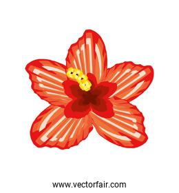 hibiscus flower tropical