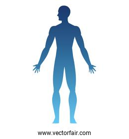 human body standing up