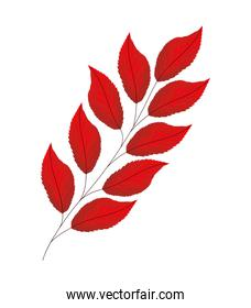 red lanceolate leaves