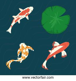 koi fishes with lotus leaf