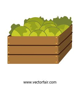 basket with lettuces