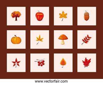 icons set of autumn leaves